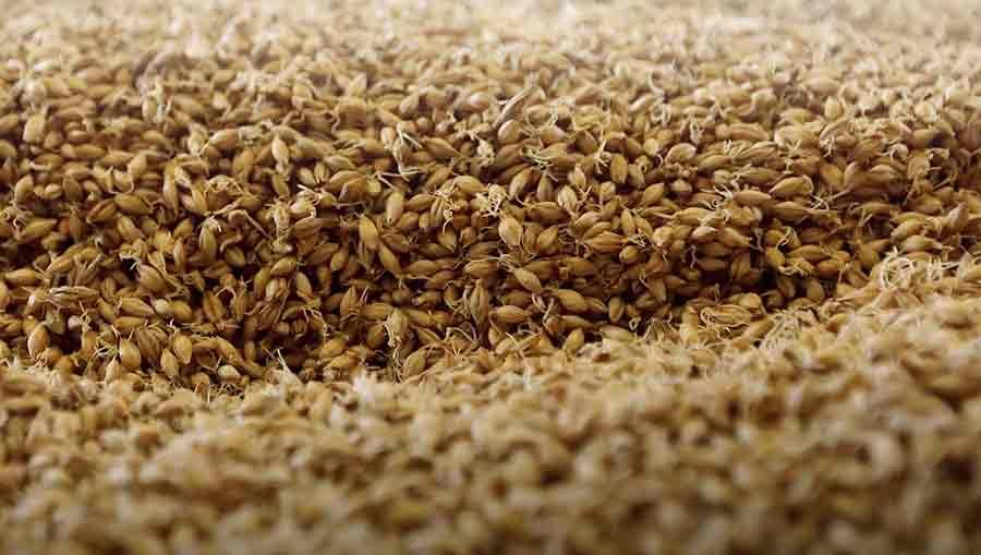 grain orge malt